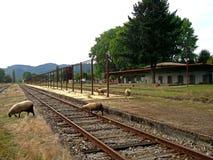 与绵羊的老火车站在智利的南部 免版税图库摄影