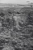 与绵羊的苏格兰海岸线风景 舍德兰群岛 苏格兰 免版税库存照片