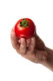 与绿色上面的完善的蕃茄 图库摄影