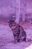 与紫色光的猫 免版税库存图片