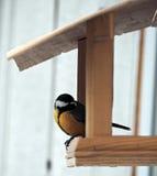 与黄色全身羽毛的山雀坐在饲养者 免版税库存图片