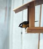 与黄色全身羽毛的山雀坐在去的饲养者飞行aw 免版税库存图片