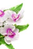 与紫色兰花的白色 库存图片