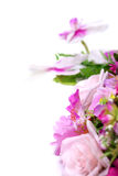 与紫色兰花的白色 免版税库存图片