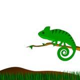 与绿色变色蜥蜴的背景 免版税库存图片