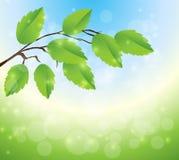 与绿色叶子和光的抽象背景 免版税图库摄影
