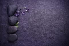 与绿色叶子和小逗人喜爱的紫色花12月的黑石头 库存图片