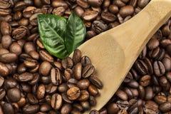 与绿色叶子的咖啡豆 免版税库存图片