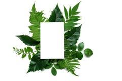 与绿色叶子和空白的白色贺卡的创造性的布局 概念查出的本质白色 免版税库存图片