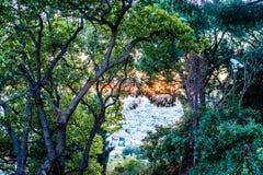 与绿色叶子和都市看法的美好和神秘的树/森林视图 免版税库存图片
