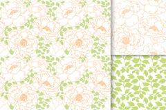 与绿色叶子无缝的样式背景集合的牡丹花 库存图片
