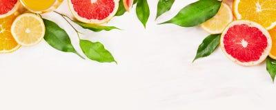 与绿色叶子框架,网站的横幅的柑橘水果切片 免版税库存照片