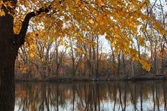 与黄色叶子的一个结构树 库存照片