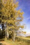 与黄色叶子的五颜六色的秋天树 免版税库存图片