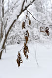 与黄色叶子的分支在雪冬天下 图库摄影