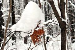 与黄色叶子的分支在雪冬天下 免版税库存照片
