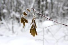 与黄色叶子的分支在雪冬天下 库存图片