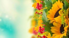 与绿色叶子的向日葵 库存照片