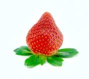 与绿色叶子的唯一草莓在白色背景中 免版税库存照片
