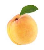 与绿色叶子的成熟杏子 图库摄影