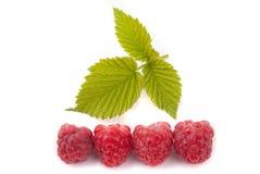 与绿色叶子的成熟莓 库存照片