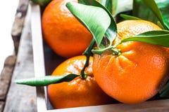 与绿色叶子的成熟水多的新近地被采摘的蜜桔在木箱子,季节性 免版税库存图片