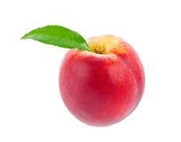 与绿色叶子的成熟水多的桃子 免版税库存照片