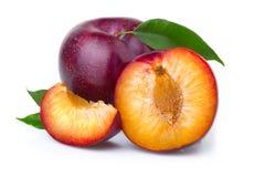 与绿色叶子的成熟紫色李子果子  免版税库存图片