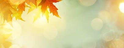 与黄色叶子的抽象自然秋天背景 图库摄影