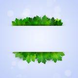 与绿色叶子的抽象通知 库存图片