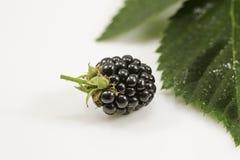 与绿色叶子的新鲜的黑莓在白色背景 免版税库存图片