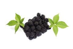 与绿色叶子的新鲜的黑莓 库存图片