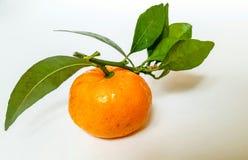 与绿色叶子的明亮的水多的蜜桔是非常健康和鲜美在白色背景 库存照片