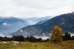 与黄色叶子的树在喜马拉雅muontains的秋天 免版税库存图片