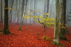 与黄色叶子的树在蓝色雾 免版税库存照片