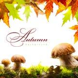 与黄色叶子的秋天背景和秋天采蘑菇 免版税库存图片