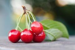 与绿色叶子的红色樱桃莓果分支 成熟果子宏观视图照片 选择聚焦,浅景深 免版税库存照片