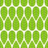 与绿色叶子的纹理 库存照片