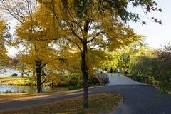 与黄色叶子的美丽的树 库存图片