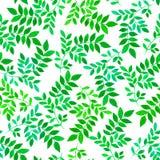 与绿色叶子的花卉无缝的样式 图库摄影