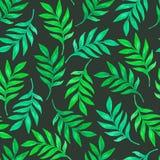 与绿色叶子的花卉无缝的样式 免版税库存照片