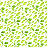 与绿色叶子的水彩无缝的样式 免版税图库摄影