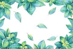 与绿色叶子的水彩框架 免版税库存图片