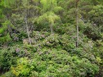 与绿色叶子的绿色林木 免版税库存图片
