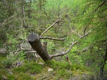 与绿色叶子的绿色林木 库存图片