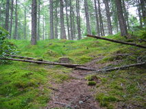 与绿色叶子的绿色林木 免版税库存照片
