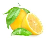 与绿色叶子的黄色柠檬 免版税图库摄影
