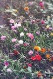 与绿色叶子的黄色红色桃红色花在领域抽去外面,定调子与在减速火箭的葡萄酒样式的过滤器 库存照片