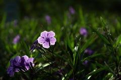 与绿色叶子的紫色花 免版税库存图片