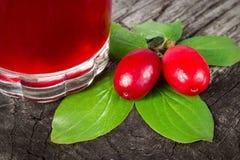 与绿色叶子的Cornel莓果 图库摄影